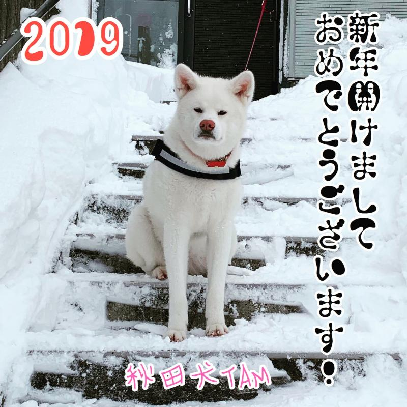 秋田犬TAM