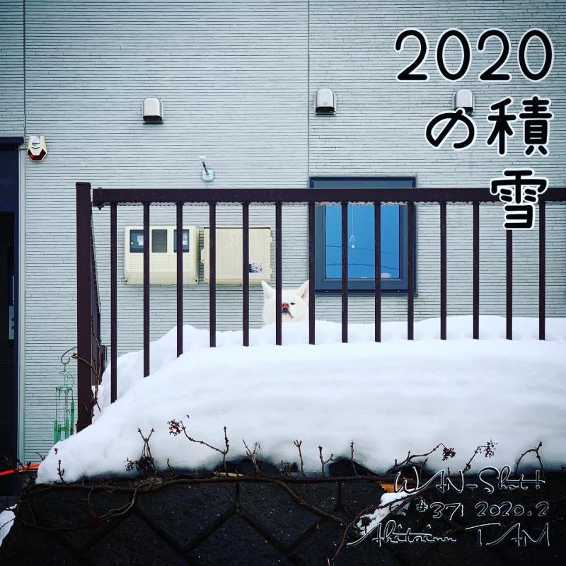 2020年の積雪量